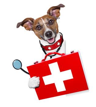 Собачий доктор