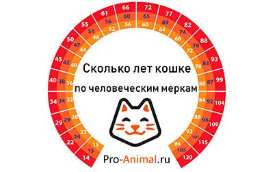 У кошек и котов год за сколько идет
