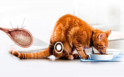 Цистит у кошек и котов: симптомы и лечение